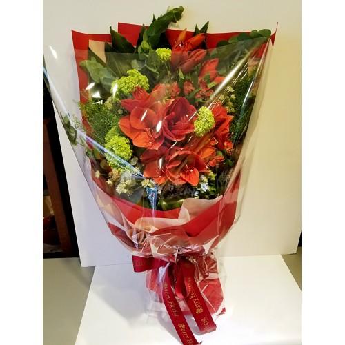 BOU 0100 高貴紅色朱頂蘭配襯花